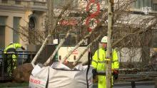 Leerlingen Onze-Lieve-Vrouwecollege planten eerste bomen op Frankrijklei (video)
